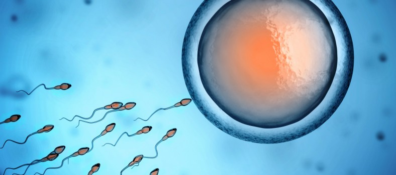 sperm and egg cell