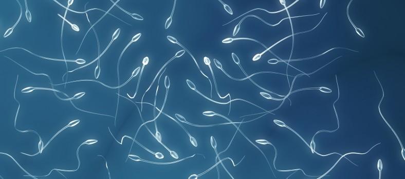concentracion-espermatozoides